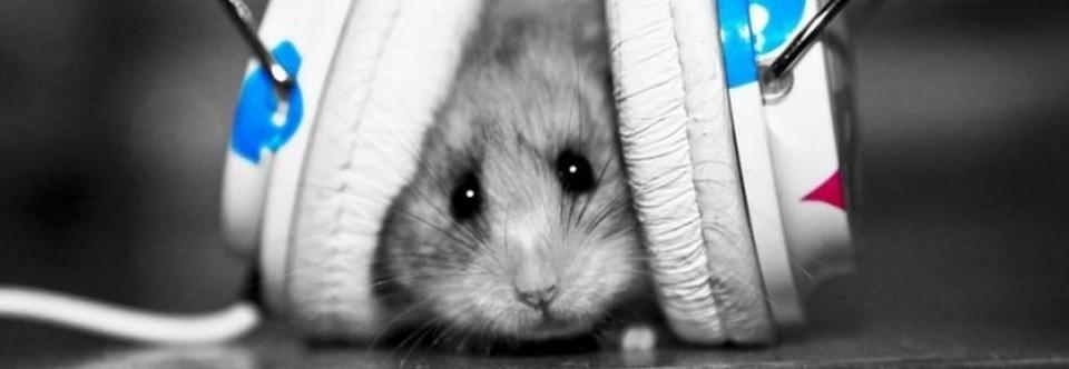 Los libros que escuchan los ratones